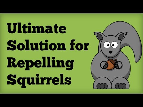Best Deer Repellent Ever Invented How To Save Money And Do It Yourself