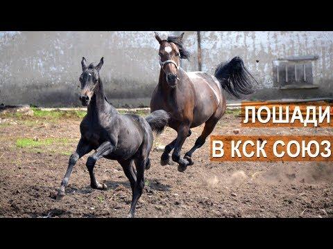 Лошади конно-спортивного клуба Союз.