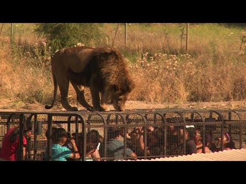Chile zoo turns tables on visitors and puts them in cage