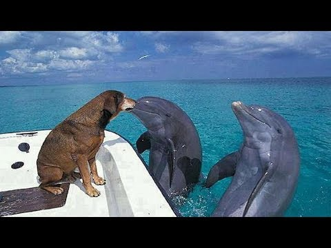 Friendship between Dolphin and Dog