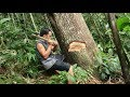 Primitive Skills: How to Harvest Rice? part1:chopping down huge tree with primitive iron axe