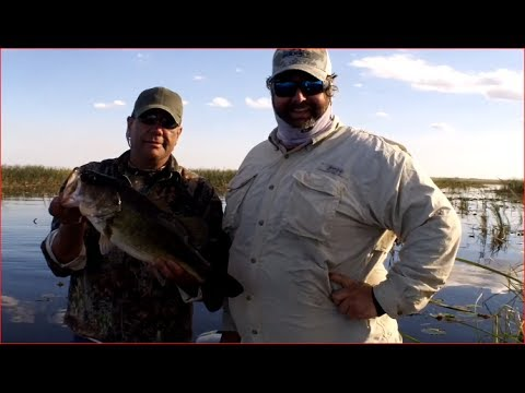 Florida Largemouth Bass Fishing with Wild Golden Shiners on Lake OKeechobee