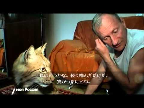 オオヤマネコを飼っている男性 ロシアのニュース