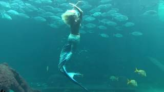 Mermaid Selfie Cam! Mermaid Melissa's view point while swimming underwater in aquarium
