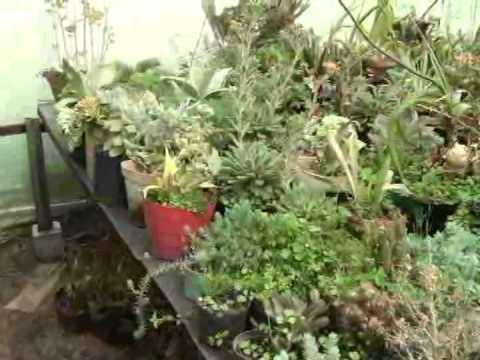 cuidado plantas ornamentales vivero san miguel sibat