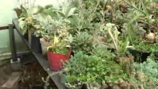CUIDADO PLANTAS ORNAMENTALES VIVERO SAN MIGUEL SIBATÉ - CANAL 10 SIBATÉ