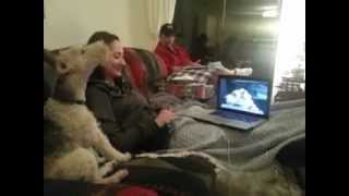 My dog can Skype! (Original)