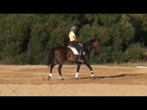 junges Pferd Arbeit um das über die Schulter gehen zu korrigieren