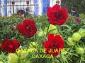 Oaxaca De Juarez Oaxaca ( Mujer Oaxaqueña )