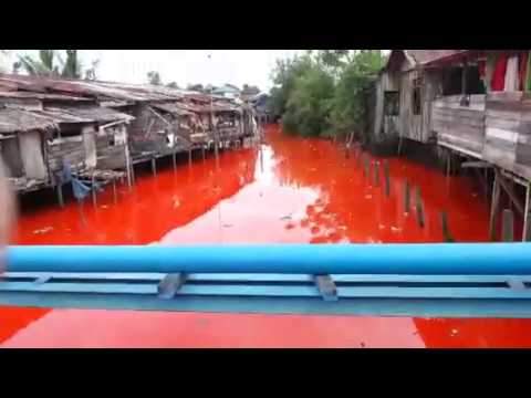 Sungai Merah Bontang Video Sungai Merah di Bontang
