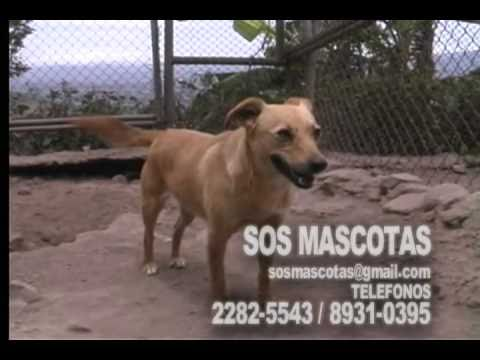 rescate-animal-sos-mascotas.html