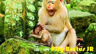 Very pity on cute baby monkey