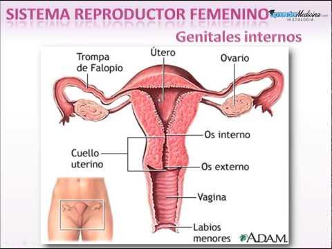Sistema Reproductor Femenino. Introducción thumbnail