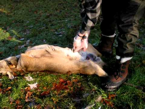 Eickhorn Hunter Anton Tony Lennartz Knife gutting Roebuck.AVI