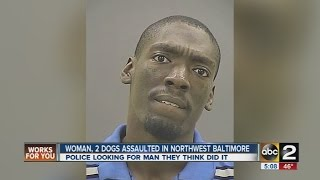Brandon Gulliver Baltimore BT1000 Gro Unit Attacks Woman & 2  Pitbulls-1 Dog Put Down