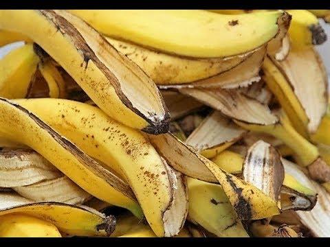ماهي فوائد قشر الموز  لن تصدق كل هذه الاستخدامات المفيدة جدا لقشور الموز ..سبحان الله