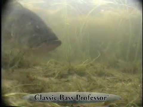 The Lure of Shallow Water for Largemouth Bass Video