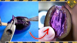 We Did Surgery on a Really Weird Grape