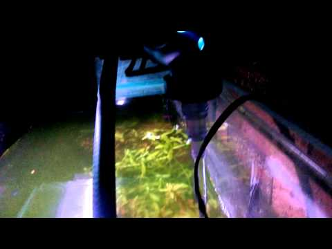 First time using UV sterilizer on a planted tank