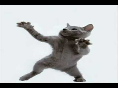Happy Gray Cat Happy Cat Dancing to Crazy