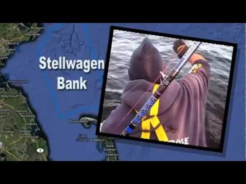 Stellwagen Bank Tuna - The Fisherman Magazine