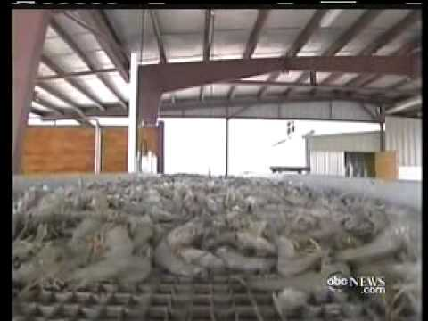 NBC Nightline-Oil Remains-Shrimp Safe To Eat?-BP Attorney Stuart H. Smith