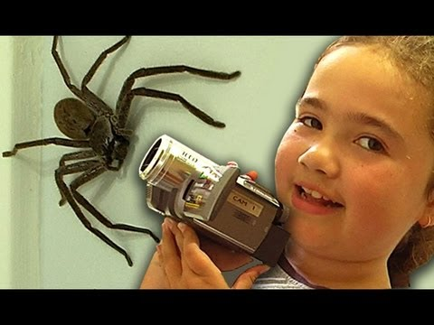Big Spider Nerf Gun Attack Dyson Vacuum Capture Kids React Slowmo Study LEOKIMVIDEO