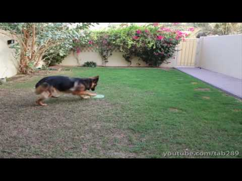 Dog Training Tutorial: Off-leash Exercise (send-off) video
