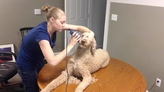 TAKING CARE OF MY SERVICE DOG!!! (6.12.15)