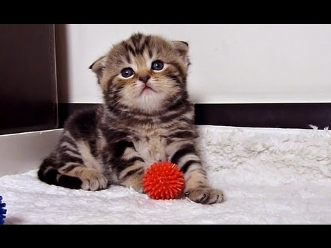 How to be a good girlfriend - 12 tips from  cute and funny kitten Rosy