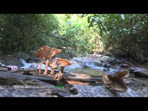 Gardens of the Gods - the Sacred groves of Kerala