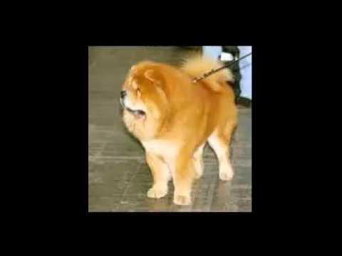 ТОП 10 самых популярных пород собак в России