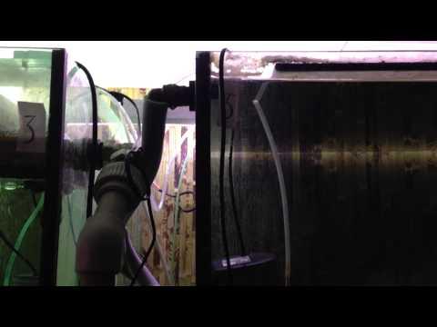 Как сделать автодолив в аквариум