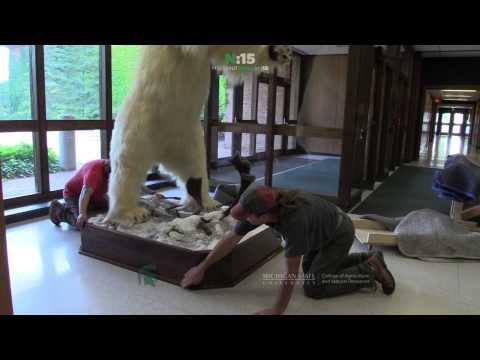 The Polar Bear Returns l ANR News in 15 Seconds