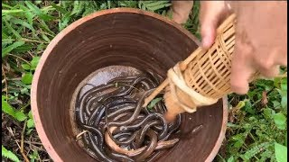 Primitive technology with survival skills of eel traps ( looking for food )
