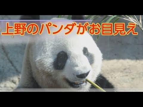 パンダ公開/入社式:4/1