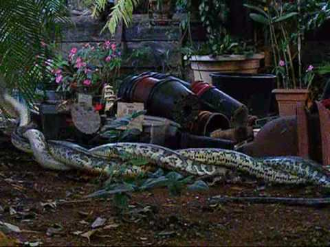 Snake Sex video
