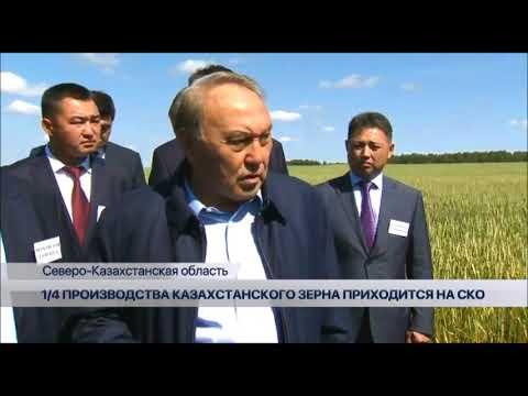Четверть производства казахстанского зерна приходится на СКО