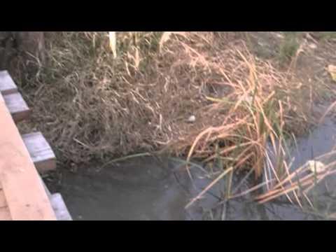 pesca en el arroyo las vivoras con tono hugo y luis.