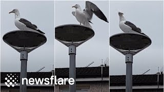 Arguing With A Seagull