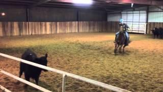 Yoda- Jared Lesh Cowhorses