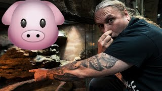 ANACONDA POOPS OUT A 15 POUND PIG!! | BRIAN BARCZYK