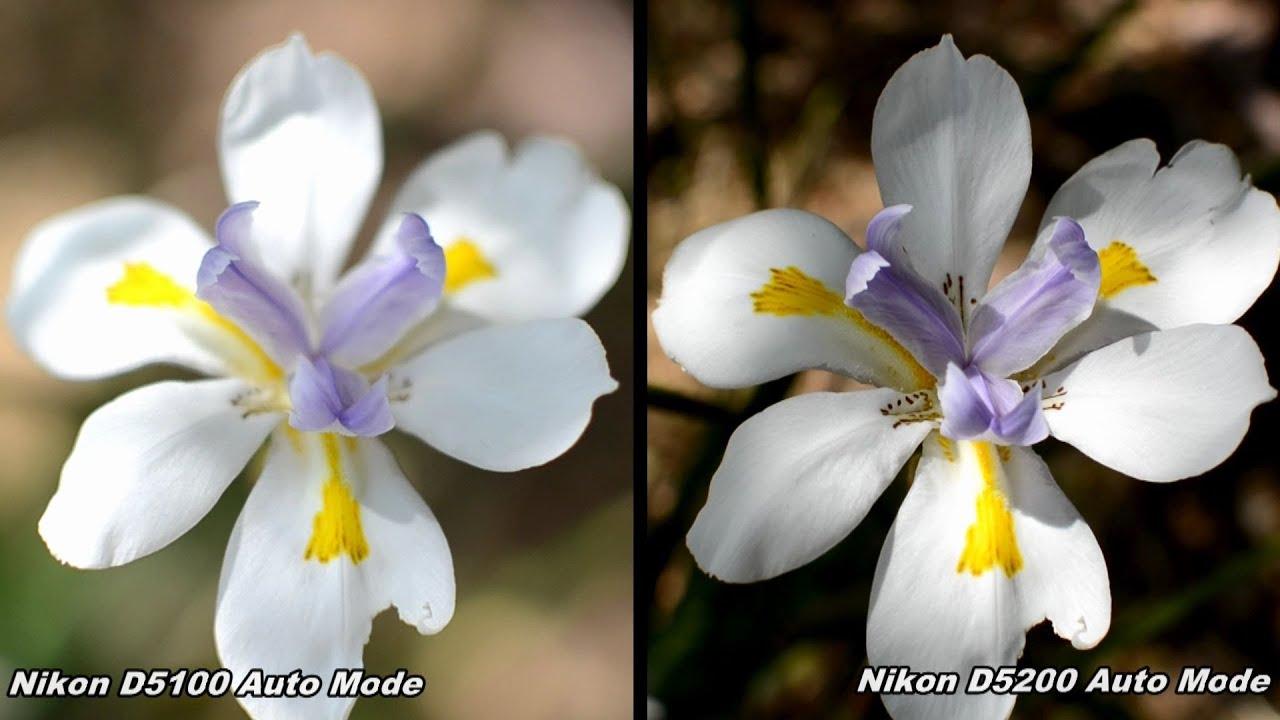 Nikon D5100 vs D5200