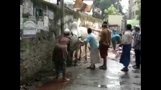 Angry cow qurbani in Bangladesh