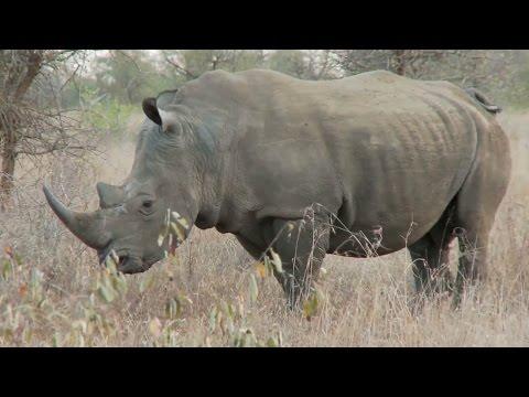 Anjelica Huston for the Protection of Elephants & Rhinos