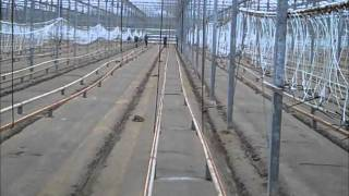Cucumbers Growing: greenhouse clean-up before planting cukes