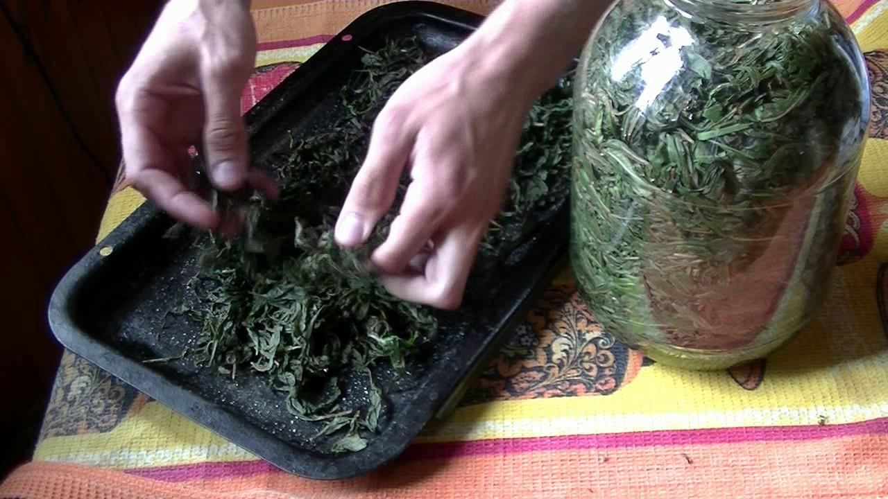 Иван чай - как собирать, сушить, приготовить 43