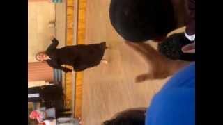 رقص سكس فى  دريم بارك dvd