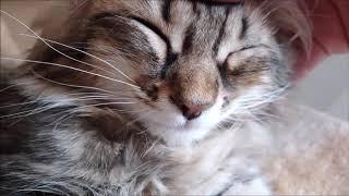 아픈 고양이때문에 집사는 더 아파요!