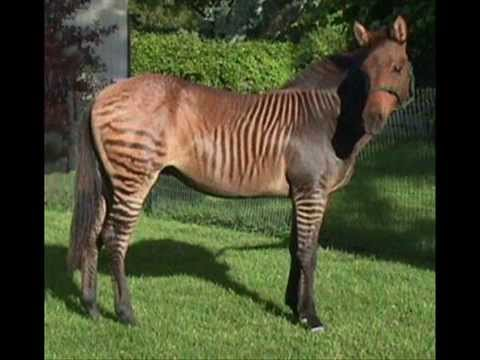 Real Animal Hybrids/Crossbreeding!
